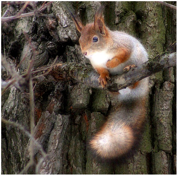 "photo ""The answer to American Squirrels"" tags: nature, wild animals"