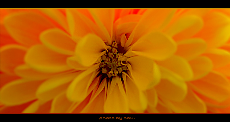"photo ""...Orange"" tags: macro and close-up, nature, flowers"