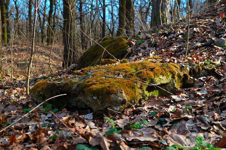 "photo ""Even stones become green in the spring"" tags: nature,"