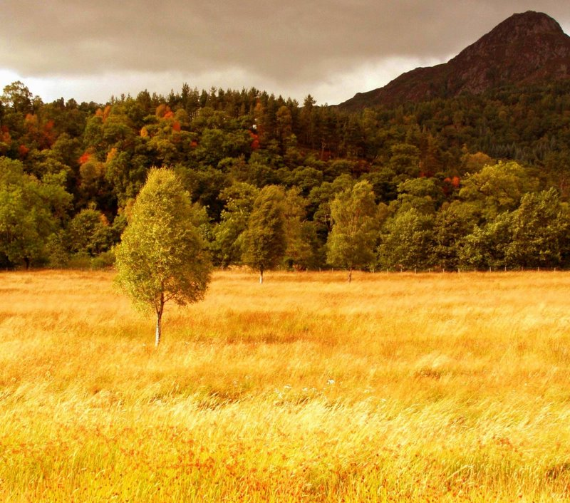 "photo ""Field of Gold"" tags: landscape, autumn"