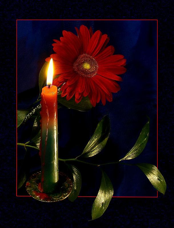 """фото """"Пусть в эту ночь цветут цветы и тихо плачут свечи…"""" метки: природа, натюрморт, цветы"""