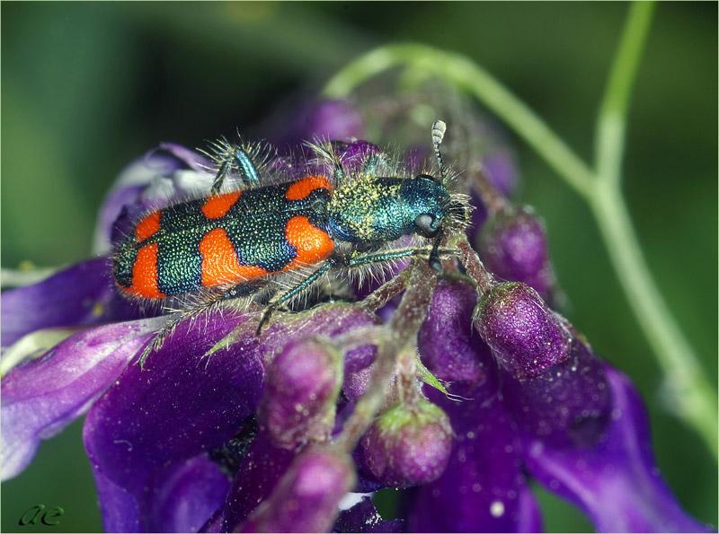 """фото """"Краски природы"""" метки: природа, макро и крупный план, насекомое"""