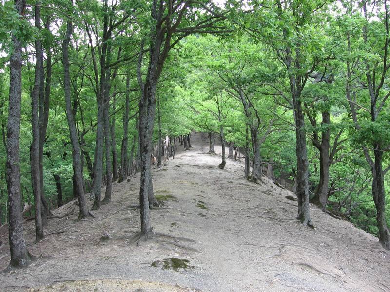 """фото """"Магический лес"""" метки: ,"""