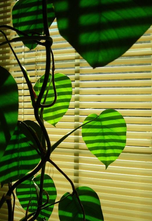 "фото ""photosynthesis"" метки: природа, цветы"