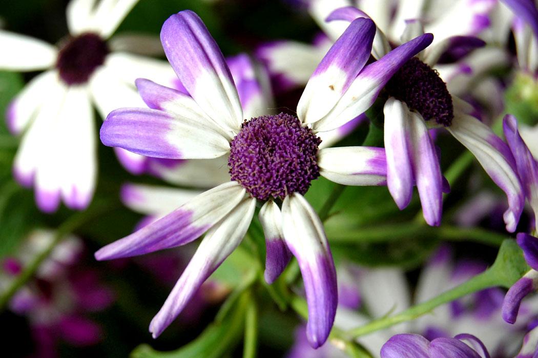 """фото """"For All of You!"""" метки: природа, макро и крупный план, цветы"""