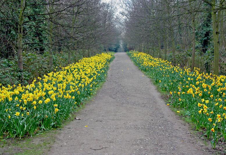 """фото """"A walk in the woods"""" метки: природа, цветы"""