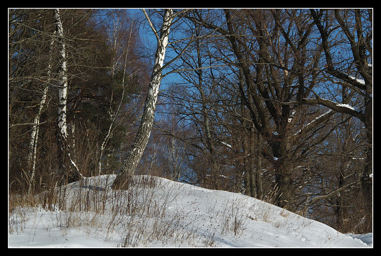 """photo """"The Winter. End of february"""" tags: landscape, forest, winter"""
