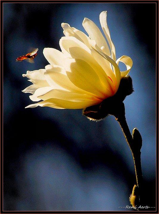 """фото """"hungry insect"""" метки: природа, макро и крупный план, цветы"""
