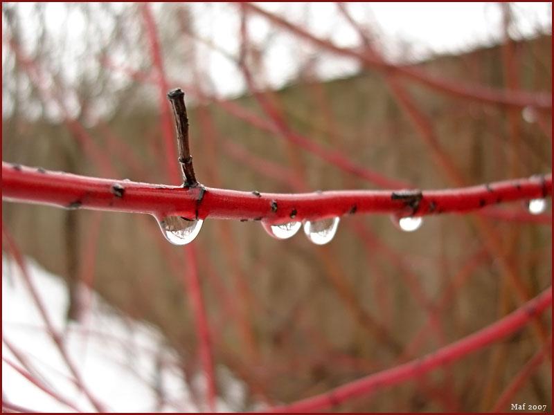 """photo """"Melt."""" tags: macro and close-up, nature,"""