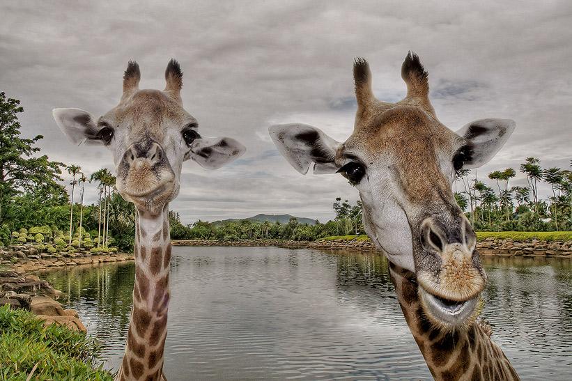 "photo ""*"" tags: travel, nature, Asia, wild animals"