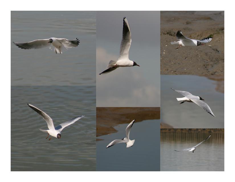 """photo """"Gulls ....."""" tags: nature, wild animals"""