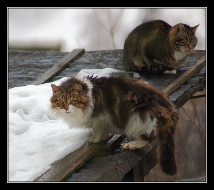"photo ""Inhabitants of roofs"" tags: nature, pets/farm animals"