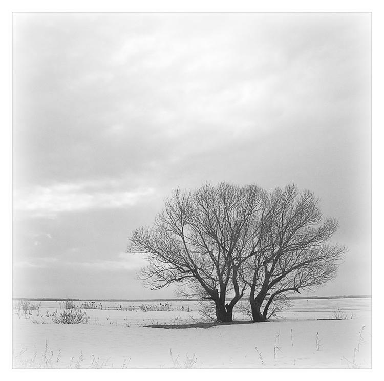"фото ""Вдвоём, зимой окружены..."" метки: пейзаж, зима"