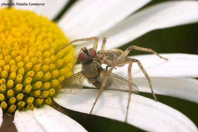"photo ""Hunter"" tags: macro and close-up, nature, insect"