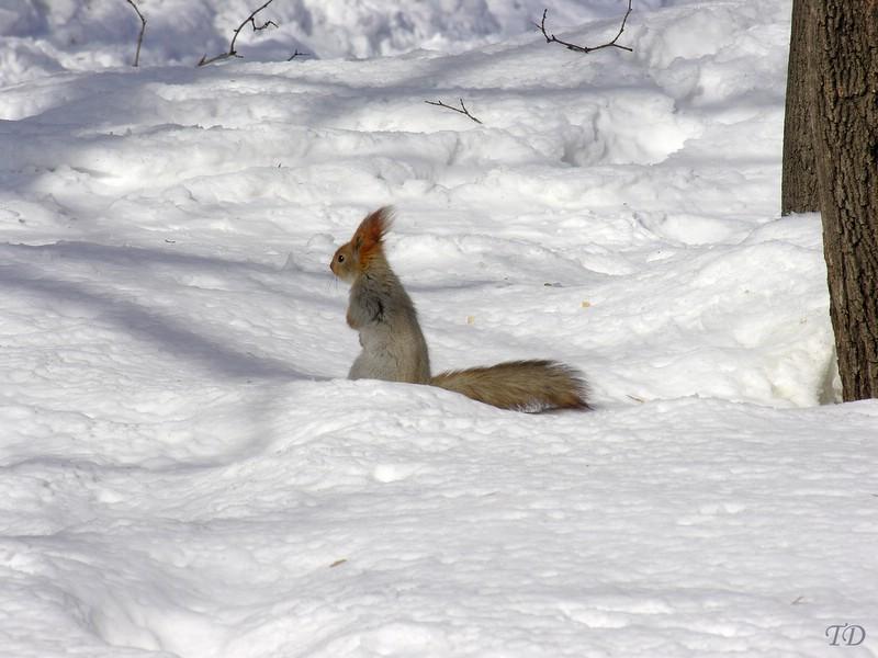 """фото """"Little hunter"""" метки: природа, дикие животные"""