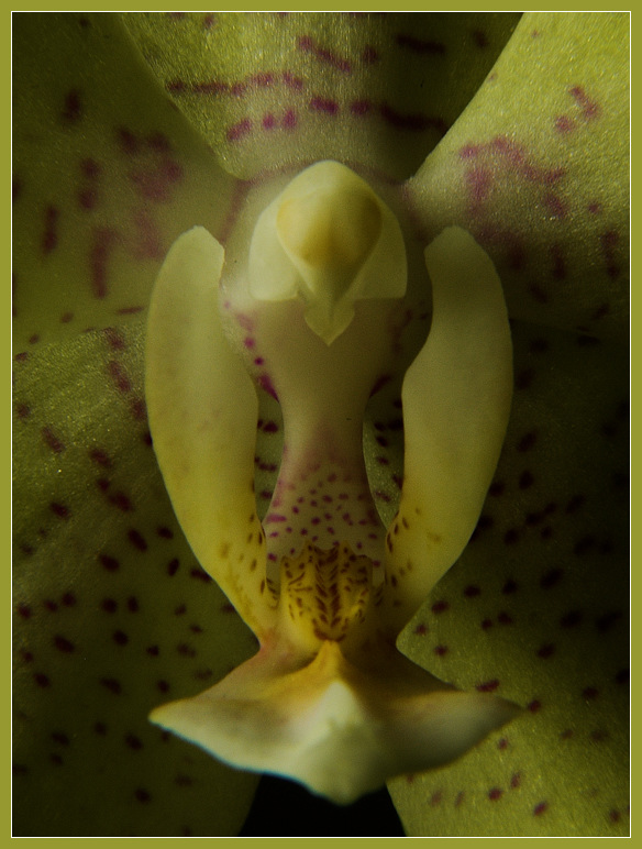 """фото """"Голубь"""" метки: макро и крупный план, природа, цветы"""