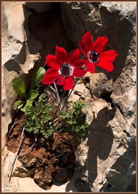 "photo ""Rocks & Flowers"" tags: nature,"