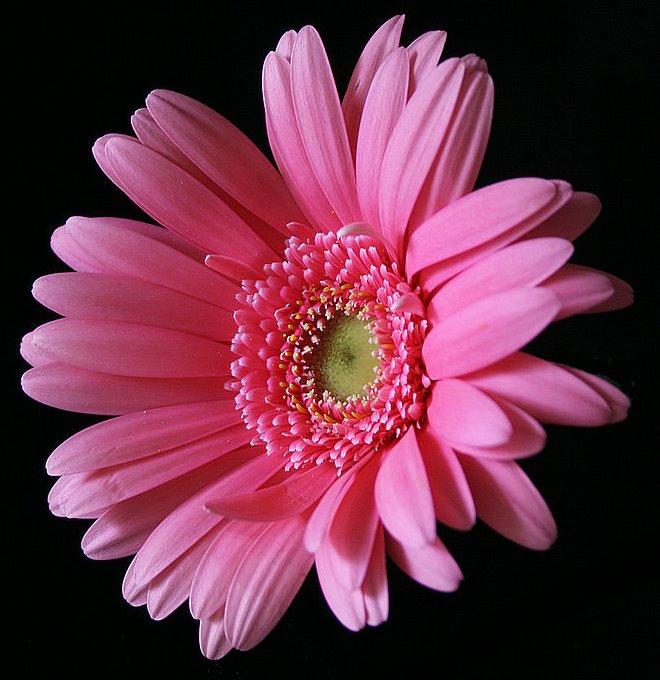 "фото ""Just playing..."" метки: природа, цветы"