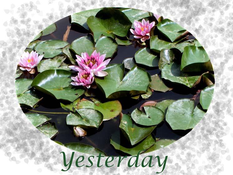 "фото ""Yesterday"" метки: пейзаж, природа, вода, цветы"