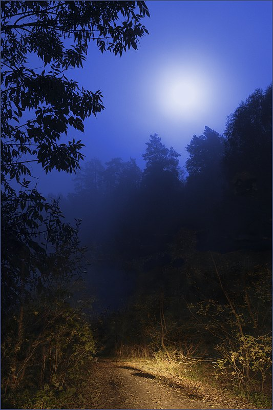 "photo ""***"" tags: landscape, forest, night"