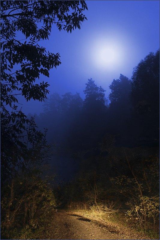 "фото ""Дорога к лесному озеру"" метки: пейзаж, лес, ночь"