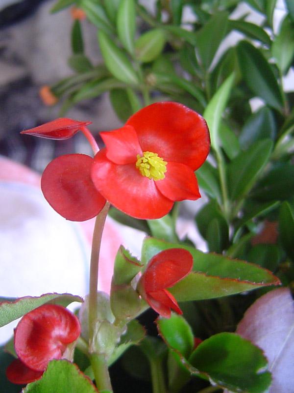 """фото """"Good Morning Sun!"""" метки: природа, цветы"""