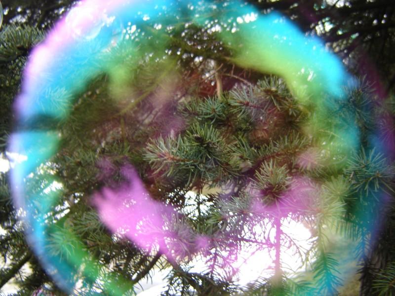 """фото """"Пузырь"""" метки: природа, разное, цветы"""