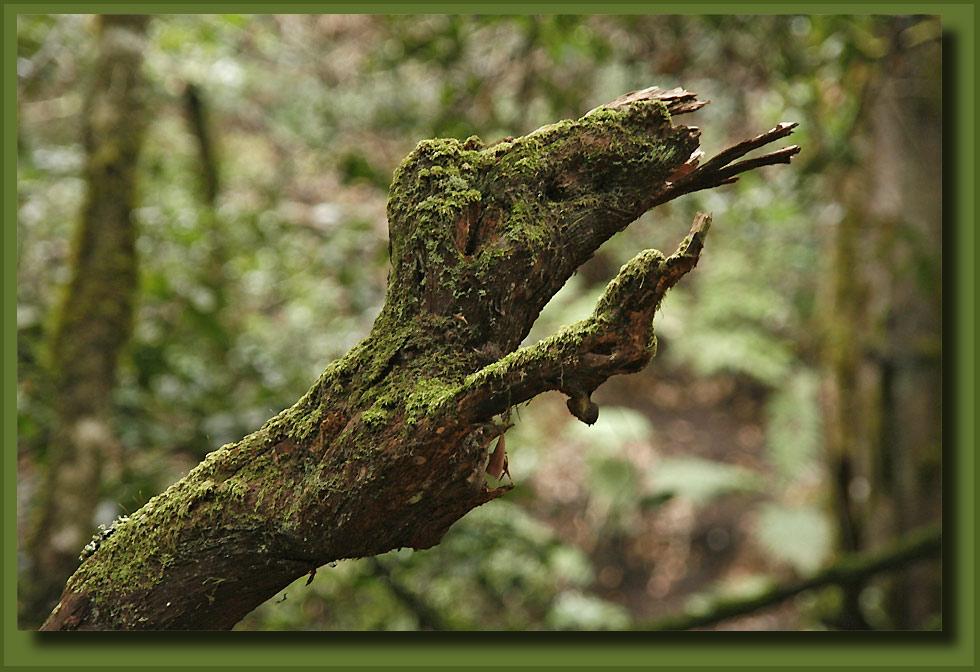 "фото ""La Gomera - Parque Nacional 2"" метки: пейзаж, путешествия, Европа, лес"