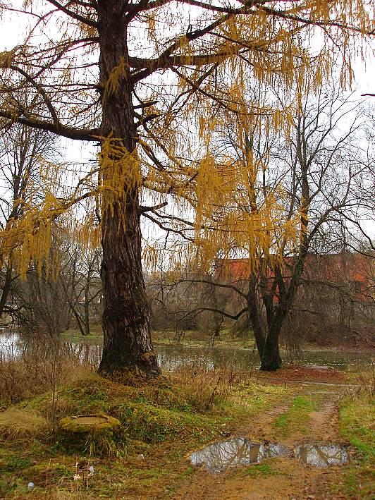 """фото """"Странный был декабрь..."""" метки: пейзаж, зима"""