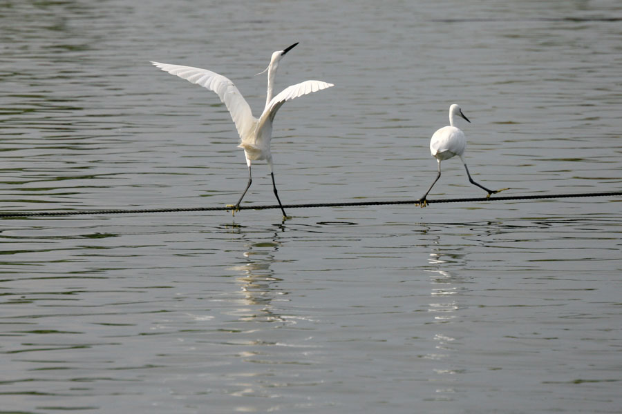 "photo ""21603.2 Первое свидание"" tags: nature, wild animals"