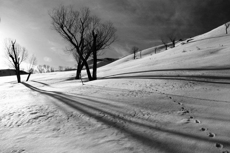 """фото """"B/W 1"""" метки: пейзаж, зима"""