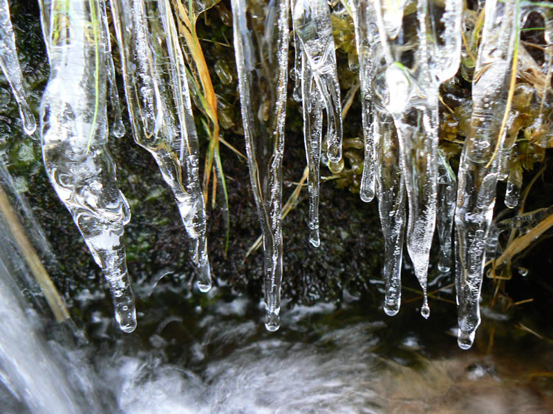 "photo ""The Thaw"" tags: macro and close-up, nature,"