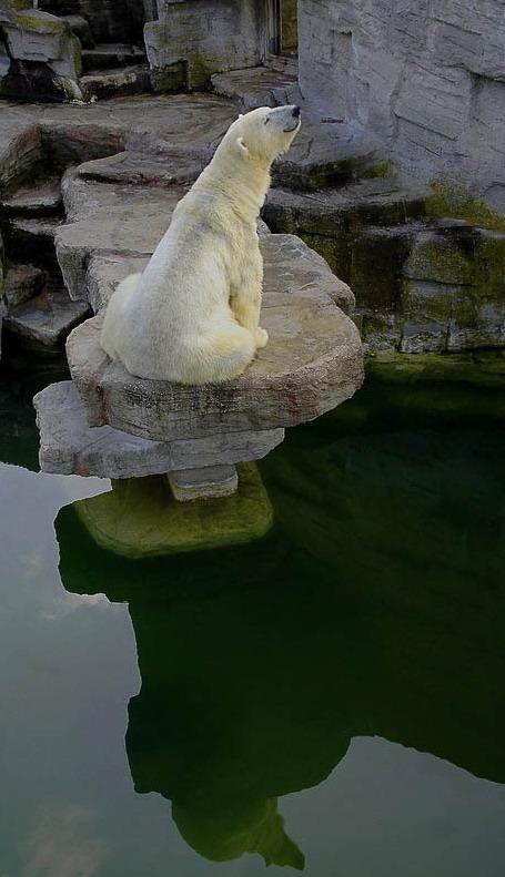 "фото ""Место под солнцем"" метки: природа, юмор, дикие животные"