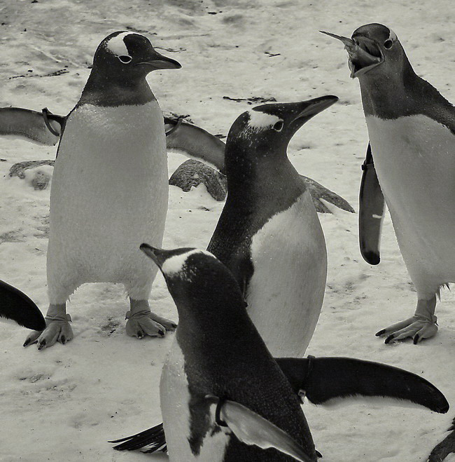 """фото """"Look what I have!"""" метки: природа, дикие животные"""