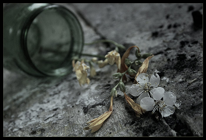 "photo ""Irretrievable love"" tags: still life,"