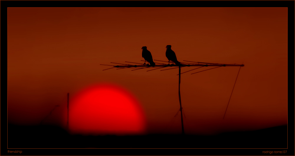 "photo ""friendship"" tags: landscape, nature, sunset, wild animals"