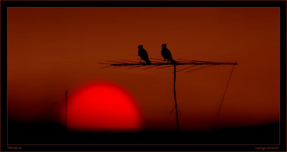 "photo ""friendship"" tags: landscape, nature, sunset, wild animals"