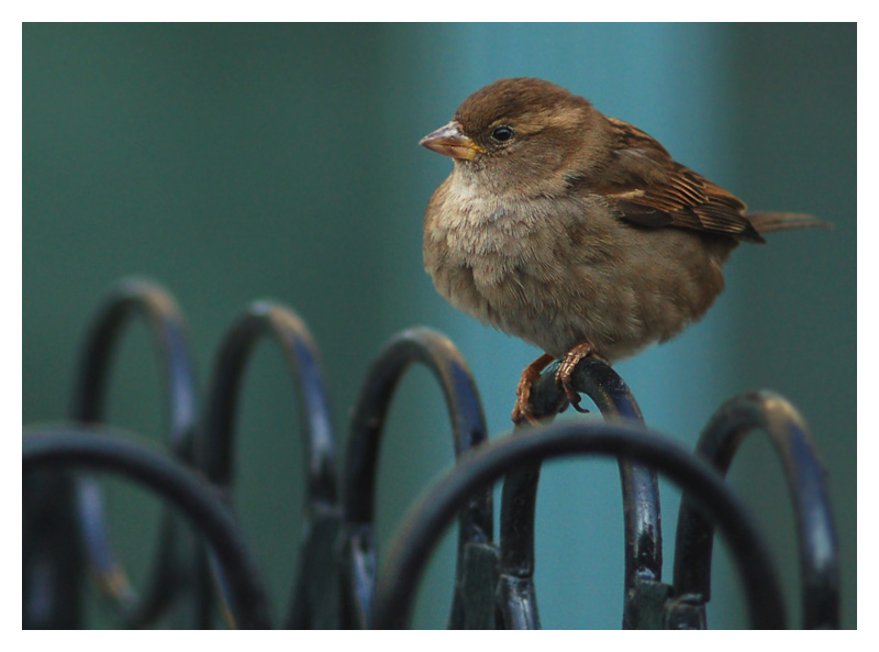 "photo ""Bird of the city"" tags: nature, pets/farm animals"