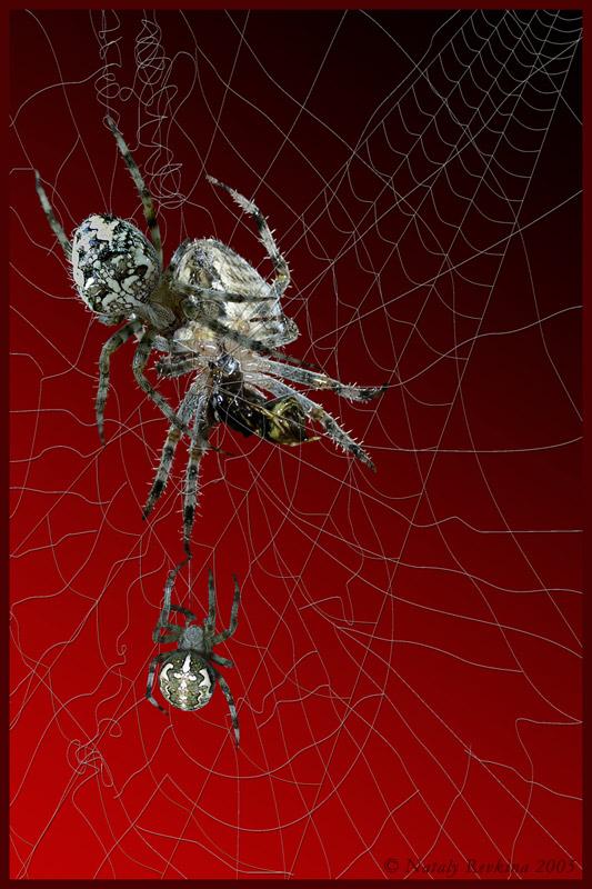"""фото """"C'est la vie"""" метки: природа, фотомонтаж, насекомое"""