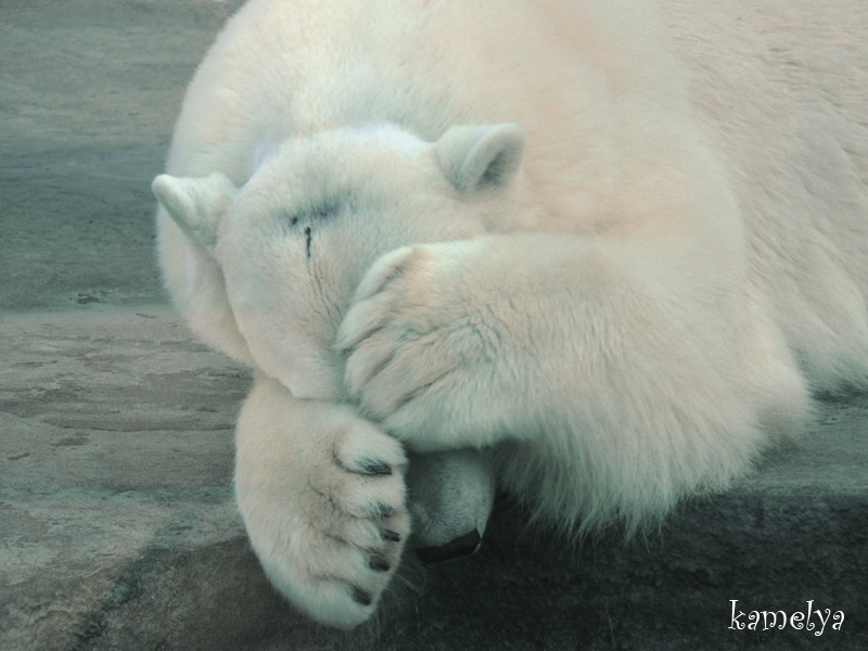 "photo ""Игра в прятки"" tags: nature, wild animals"