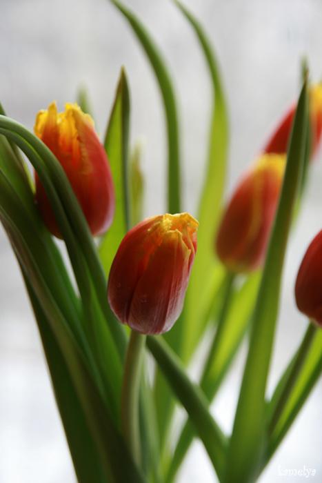 """photo """"Первые дни весны"""" tags: nature, flowers"""