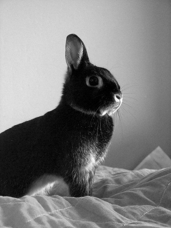 "photo ""'Valiant'"" tags: nature, portrait, pets/farm animals"