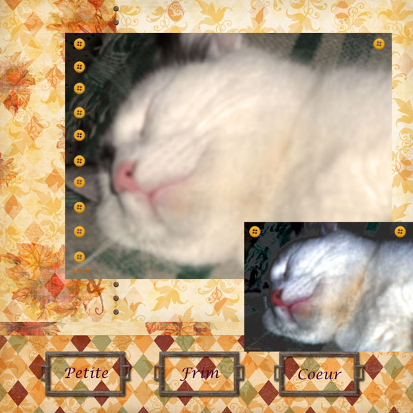 "photo ""Sleeping."" tags: ,"