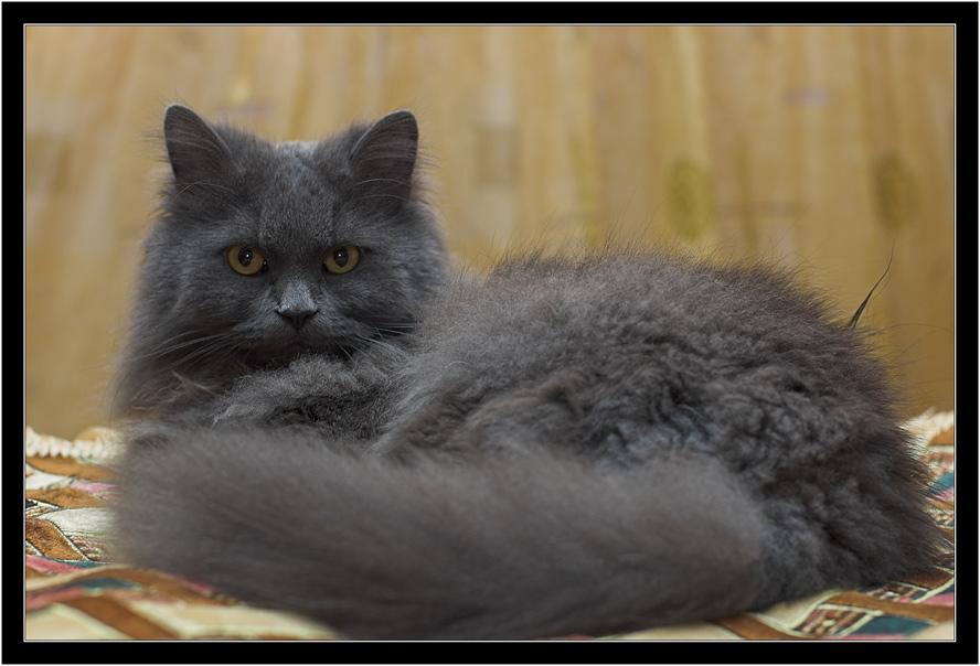 "photo ""My friend Kuzia"" tags: nature, pets/farm animals"