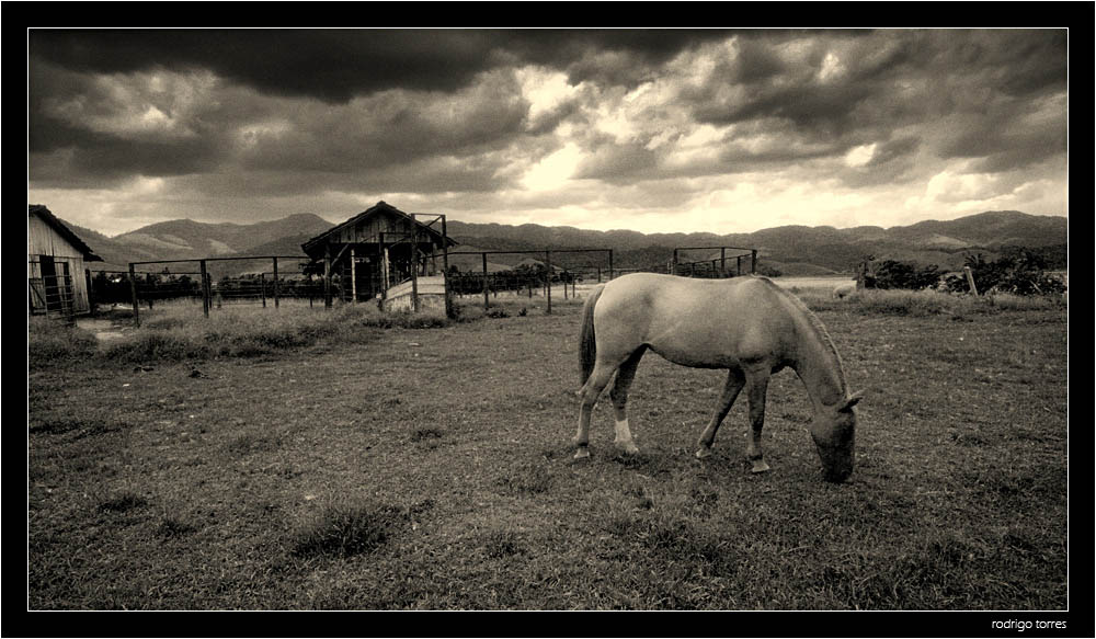 "photo ""before the storm"" tags: black&white, nature, pets/farm animals"