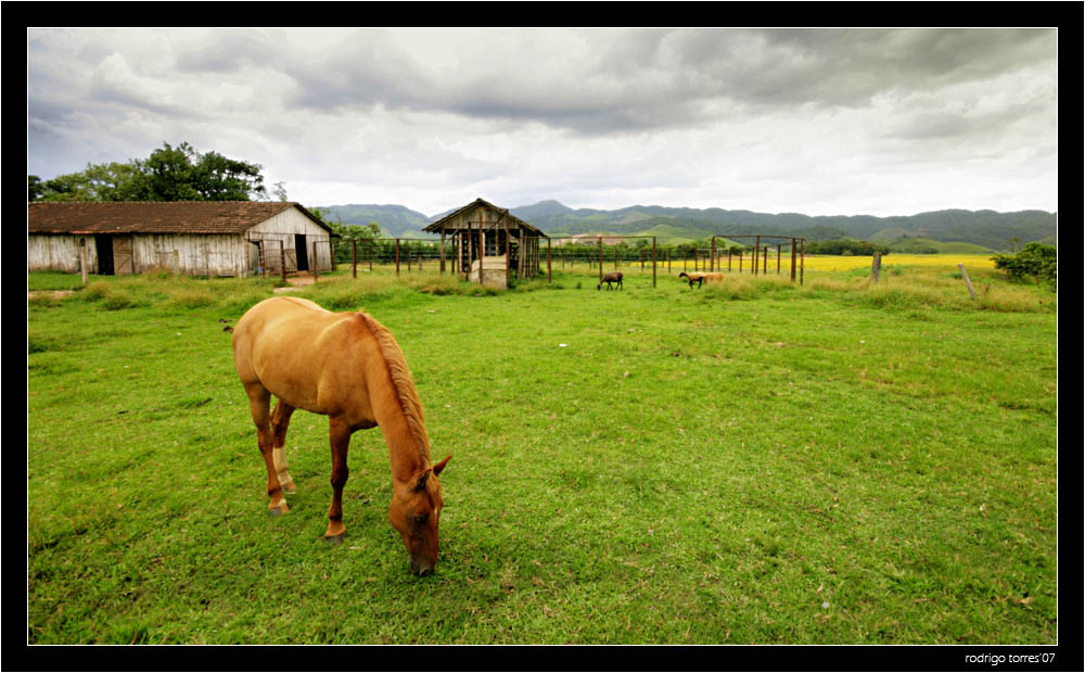 "photo ""serenity"" tags: travel, nature, South America, pets/farm animals"