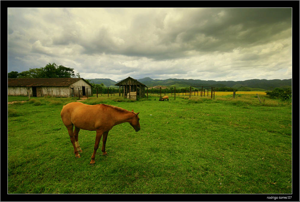 """photo """"time to go home"""" tags: nature, travel, South America, pets/farm animals"""