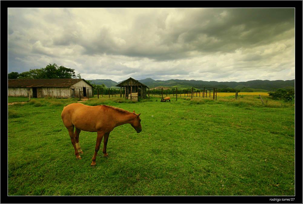 "фото ""time to go home"" метки: природа, путешествия, Южная Америка, домашние животные"