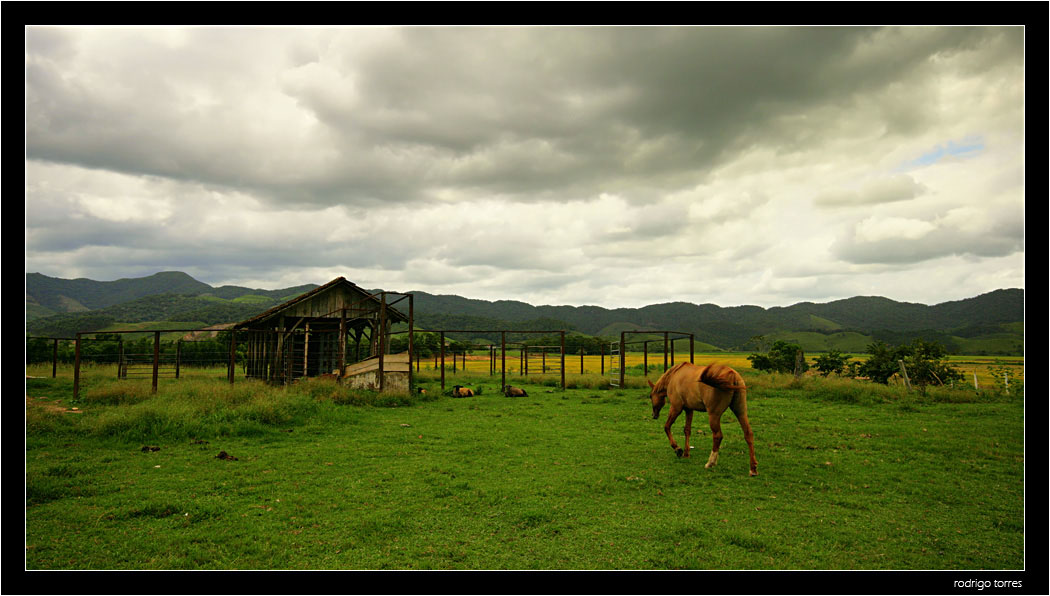 """photo """"going home.."""" tags: nature, travel, South America, pets/farm animals"""