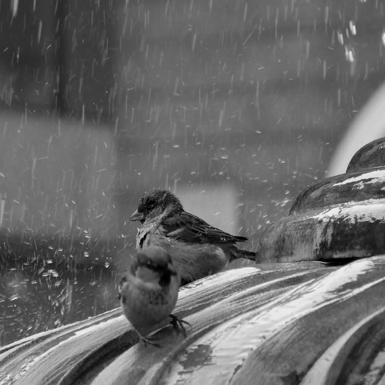 "photo ""***"" tags: black&white, nature, wild animals"